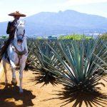 La Ruta del Tequila en Jalisco