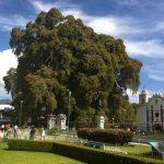 El Árbol del Tule en Oaxaca