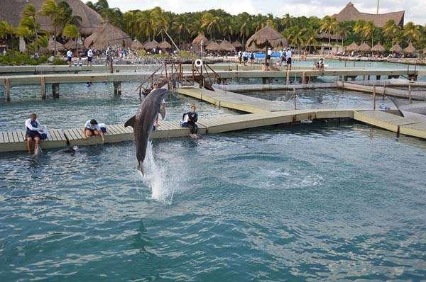 Parque Xcaret 3 delfines
