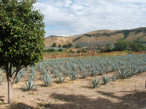 Tequila, Pueblo Mágico de México