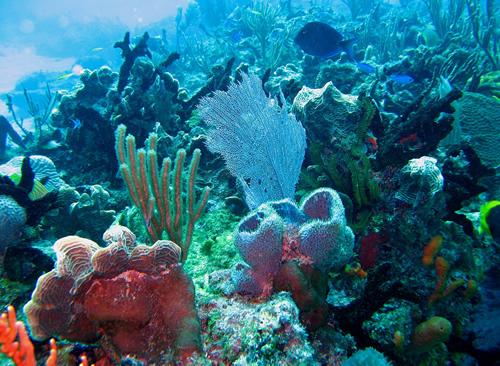 Parques naturales en Quintana Roo