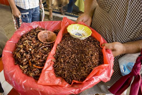 Conocer la gastronomía de Oaxaca