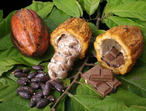 El festival del chocolate en Tabasco